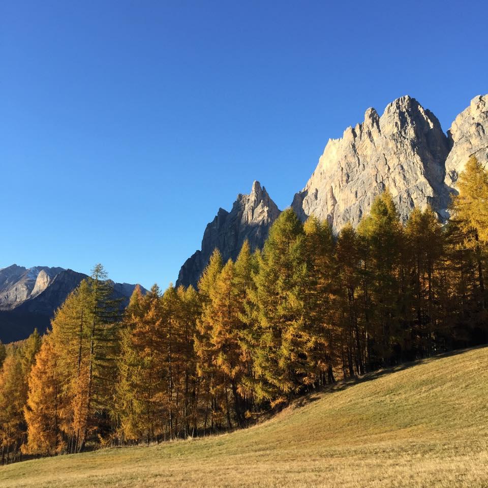 Cortina autunno larici - Credits Paolo Tassi