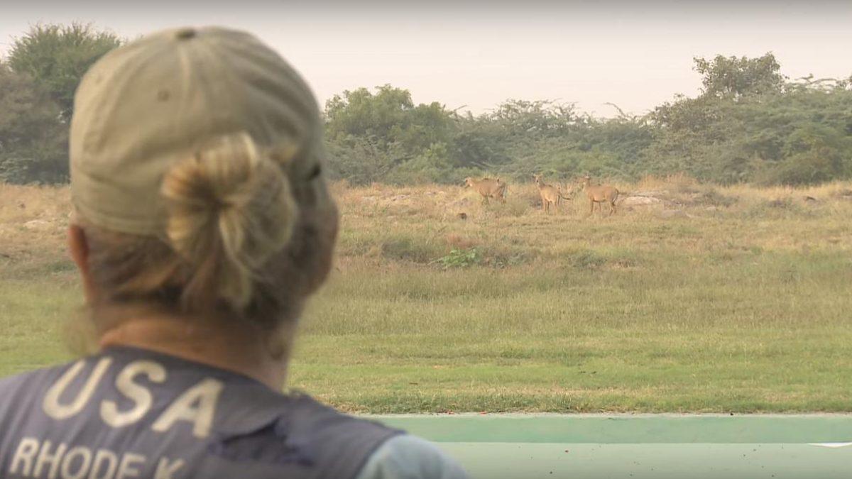 Al pascolo durante la finale di skeet, spareggio interrotto in India